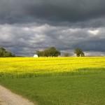 Rapsfeld, Foto: Michael Schmitt