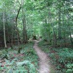 Waldweg, Foto: S. Bayer